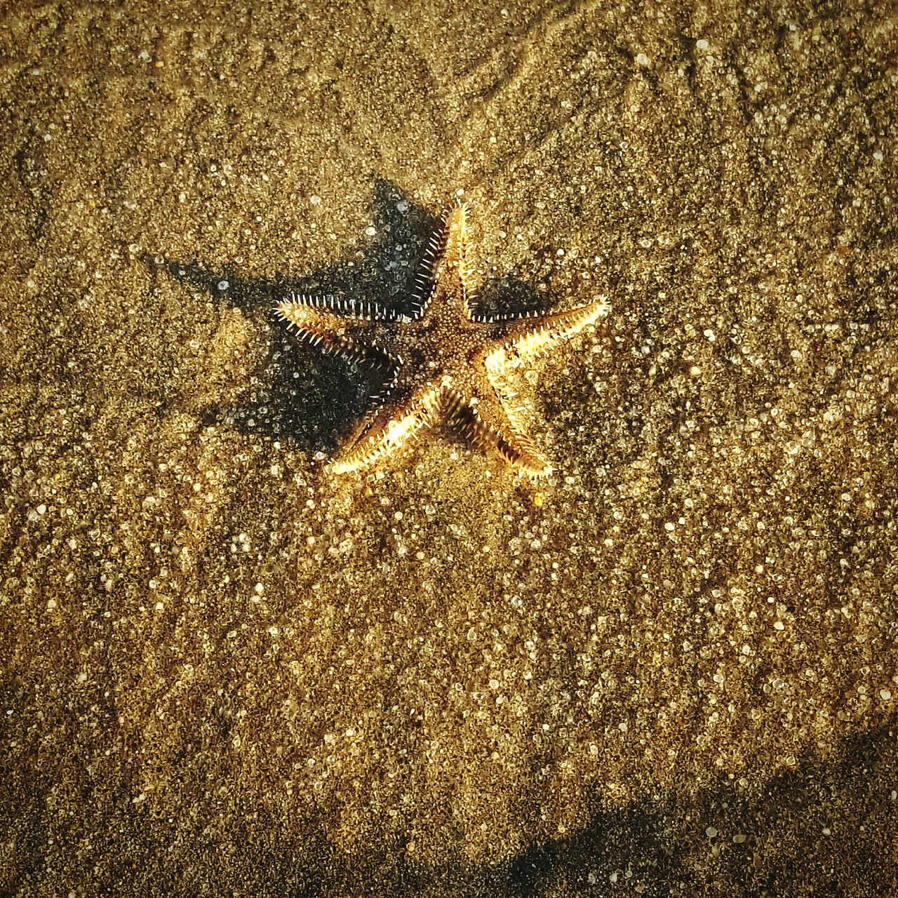 Starfish on the beach Gold Colored Close-up Beach Nature Sand Starfish  Starfish At Beach