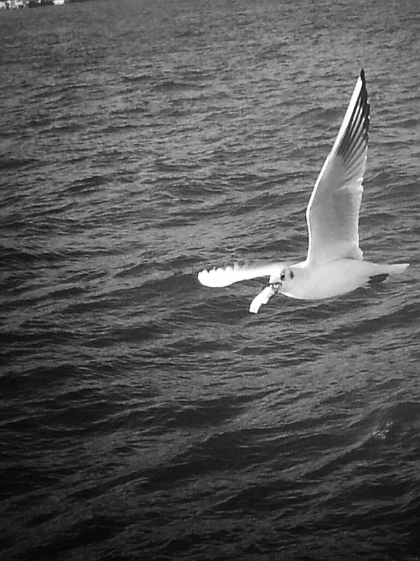 And the winner is... shootermag helloworld eye4photography  sea_collection bw_collection eye4black&white  seaporn sea blackandwhite black and white Taking Photos Seagulls Black & White monochrome bnw by Sinemis Koç