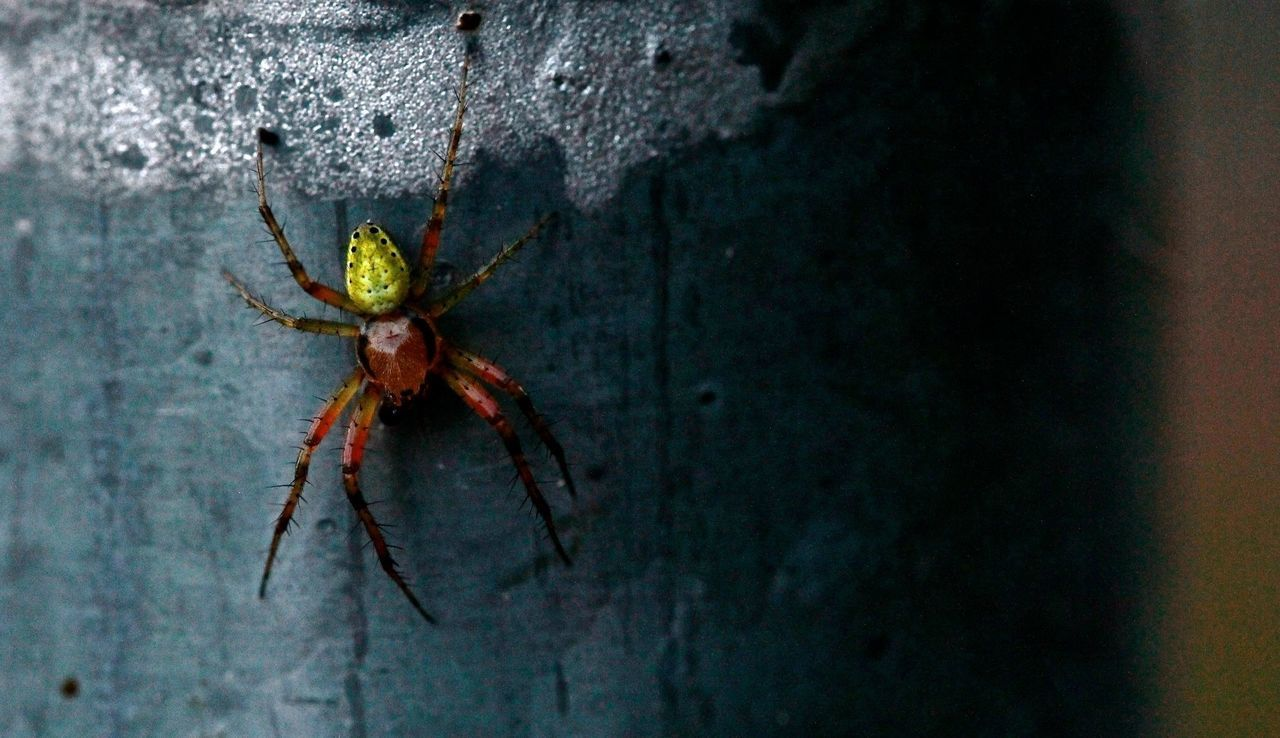 Beautiful stock photos of spider's, Animal Leg, Animal Themes, Animals In The Wild, No People