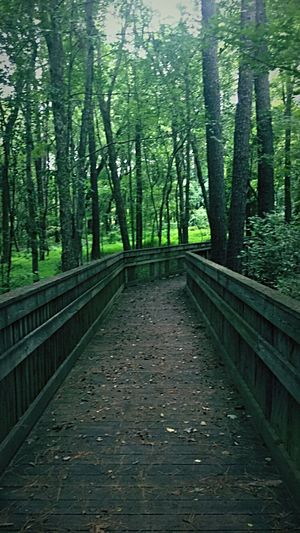 Tree Forest Nature Day Outdoors WoodLand Tranquil Scene The Way Forward Bridge - Man Made Structure Scenics Growth Green Color Tree Trunk Beauty In Nature Tranquility No People Footbridge Sky Trail Pathway Nature Park  Nature Path Nature Trail Forest Breathing Space