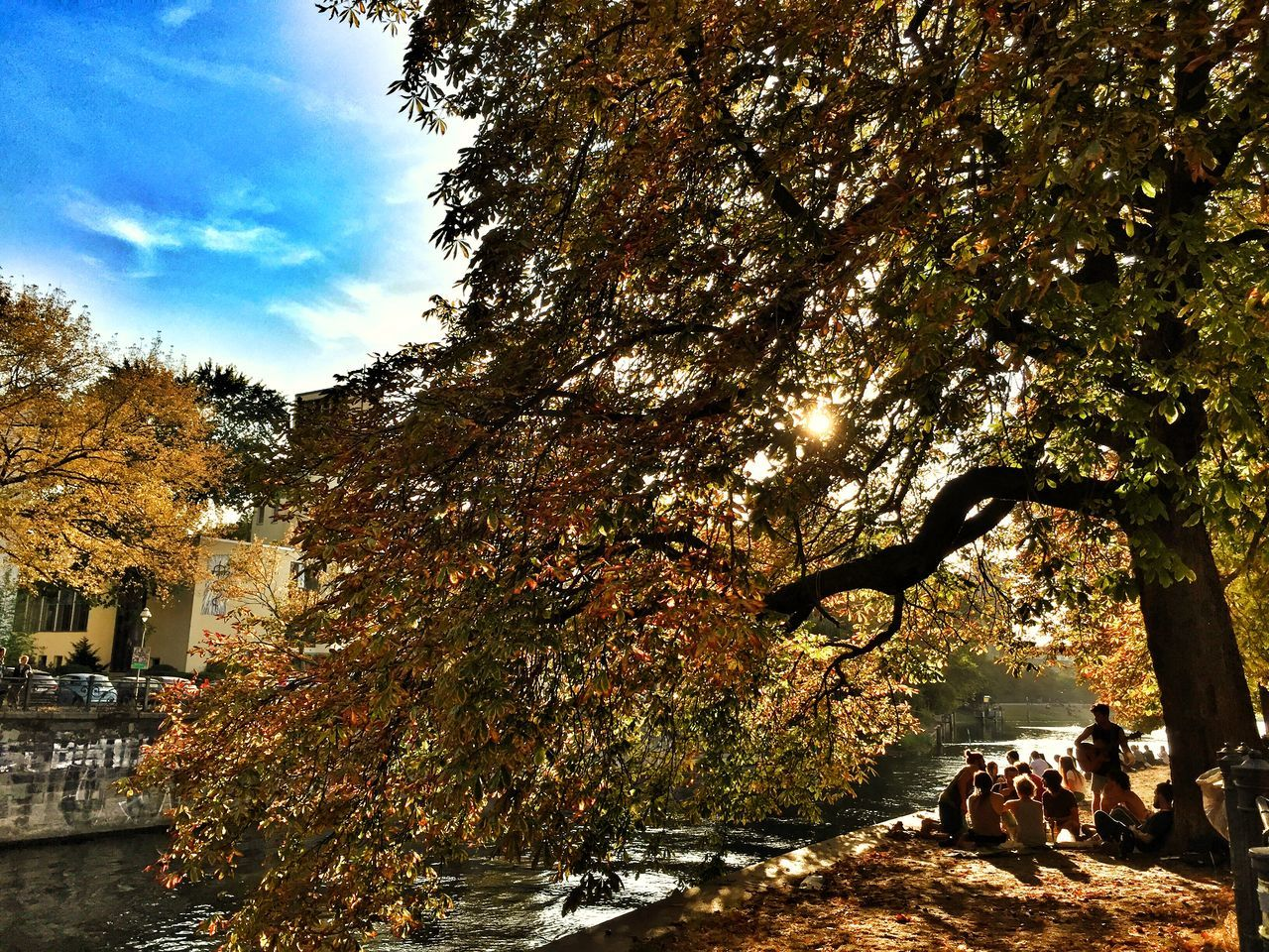 tree, nature, autumn, growth, outdoors, day, tranquility, beauty in nature, branch, scenics, sky, no people, water, architecture