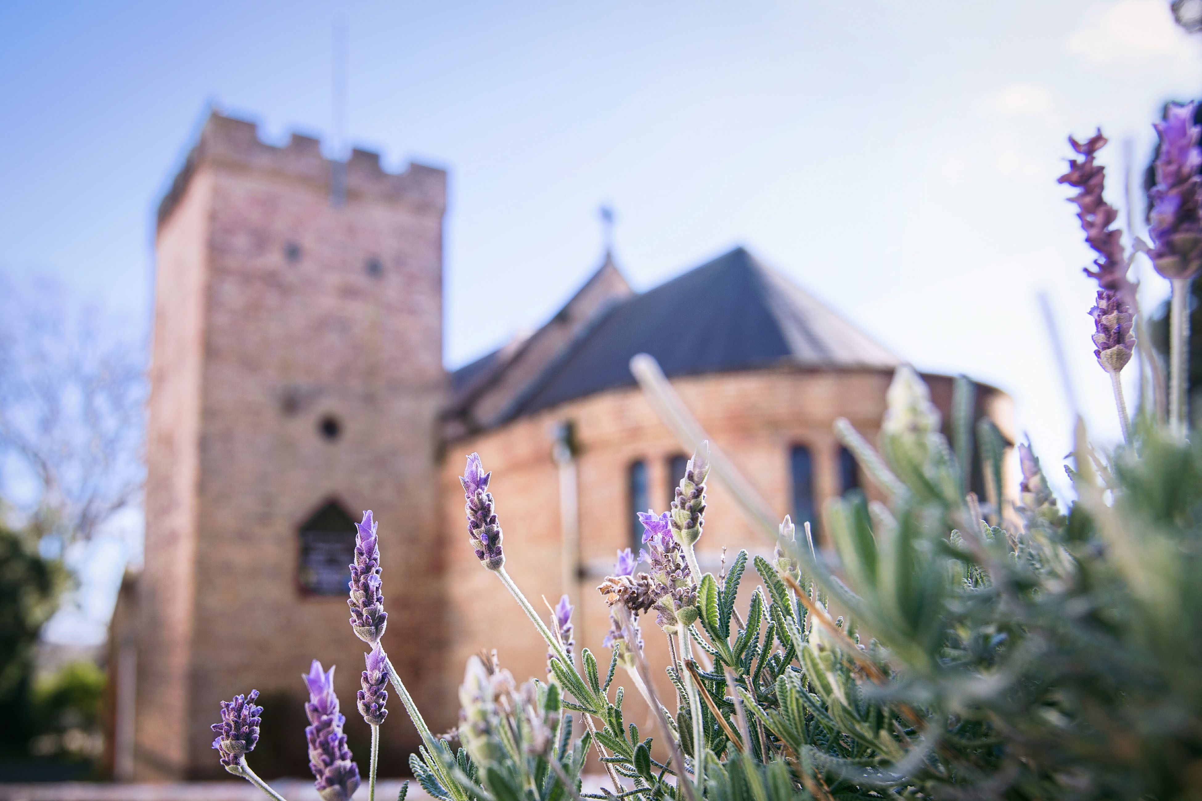 architecture, history, built structure, building exterior, no people, day, outdoors, flower, nature, sky