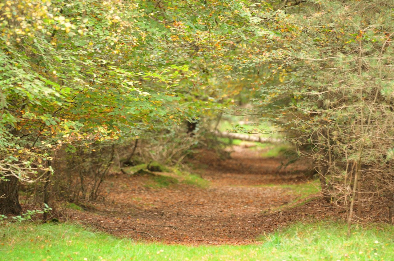 A dingly dell in Thetford Forest Walking Around Colours Of Autumn In The Forest Relaxing