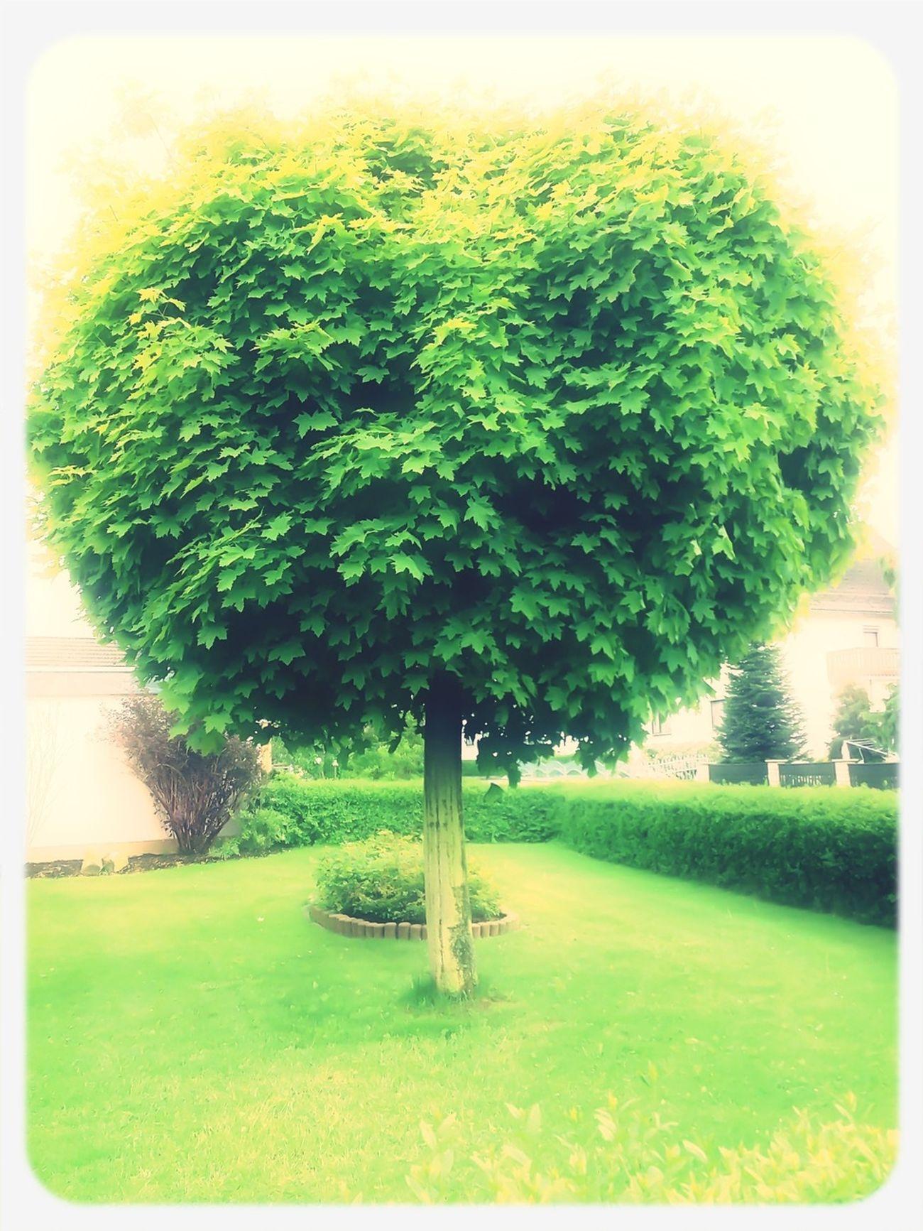 Tree shaped like alice in wonderland Treenporn
