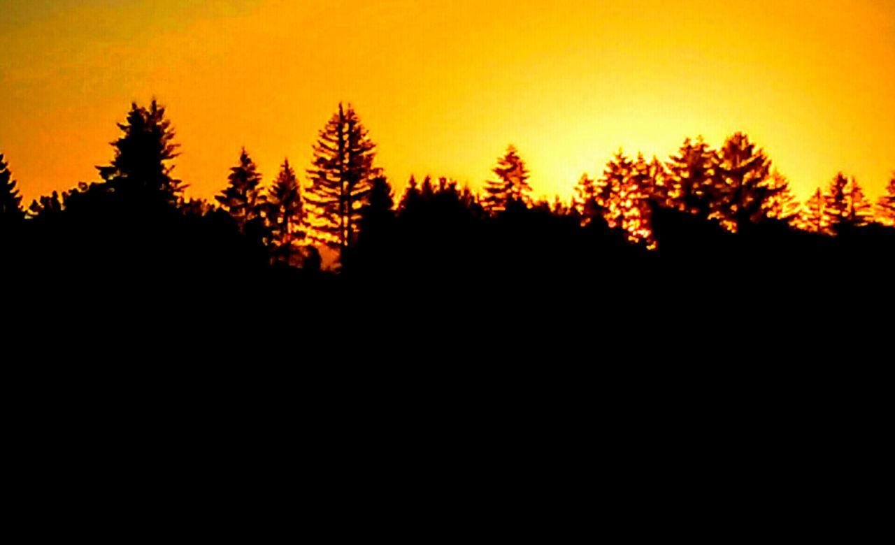 Beauty Is.... Beauty In Simplicity Silhouette_collection Silhouettes Of Trees Silouette & Sky Sunrise_Collection Sunrise Silhouette Sun Coming Through The Trees Beautiful View Things I Like Lost In My Thoughts Dayumm Tadaa Community Tada Collection Coulor Of Life Right Place Right Time Love Of Nature Tree Hugger 🌳 Color Palette Whats On The Roll Sky Gazing Amazing View Snap Snap Snap Snap Snap Life Colour Of Life