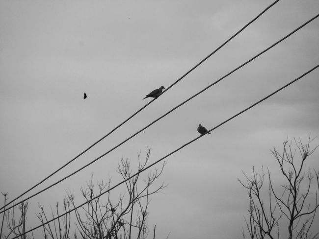 Aves Beauty In Nature Birds Birds Silhouette Birds Wildlife Birds_collection Cloud - Sky Low Angle View Nature No People Silohuette Silouette & Sky Trees And Sky