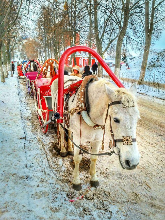 Animal Themes Red Domestic Animals Outdoors Day Tree Vladimir Russia Horse Horses Snow Winter Wintertime Suzdal Suzdal Kremlin Kremlin