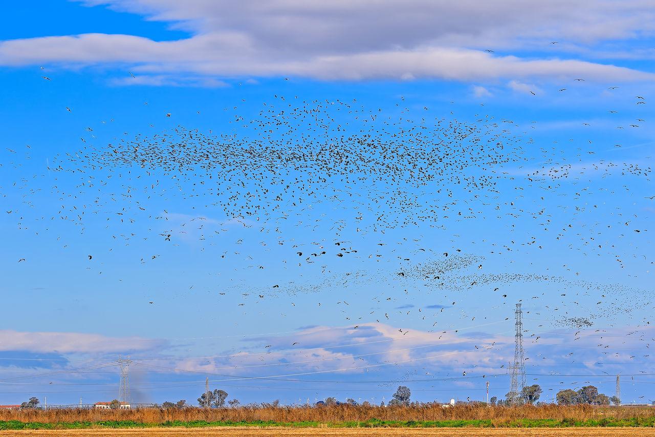 Flock Of Birds Flying Over Field Against Sky