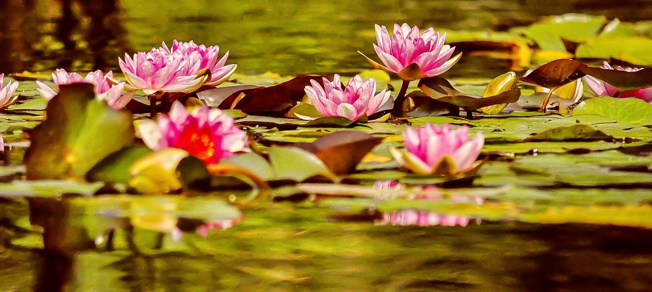 Wideangle Water Lilies. Lilly Pads. Check This Out Eye4photography  EyeEm Nature Lover Walking Around Taking Photos Bethesda Fountain Central Park - NYC From My Point Of View