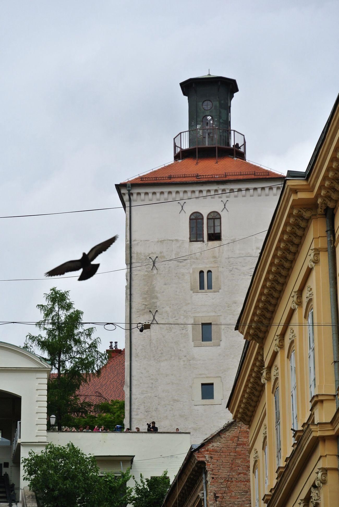 Nikon 1 V1 Zagreb Tak Imam Te Rad People Watching No Edit/no Filter
