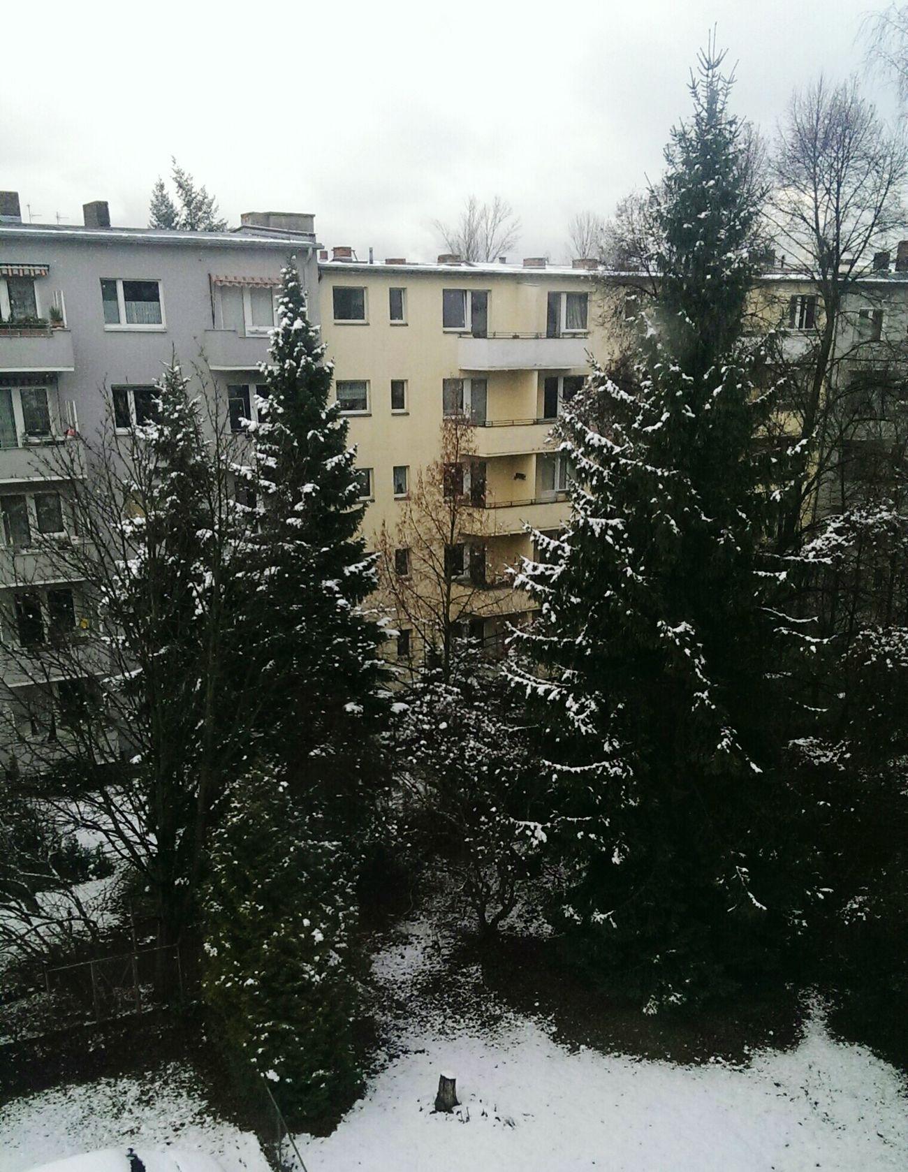 Schneeflöckchen, Weissröckchen... ?❄⛄ Merrychristmas❄️ Snow ❄ Xmas Tree Happy Holidays!