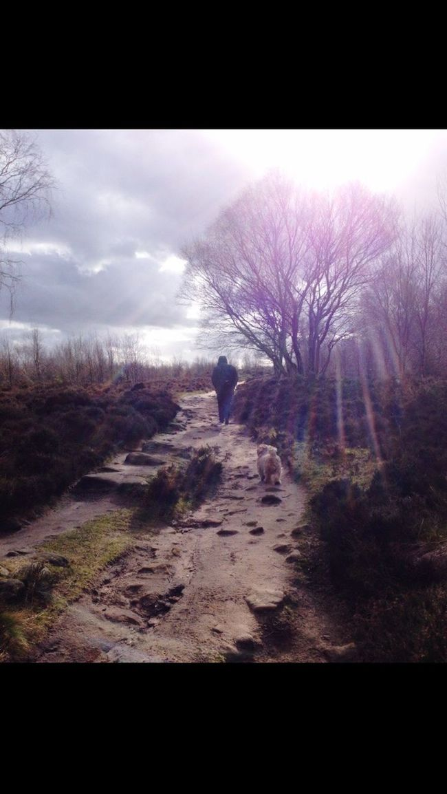 Taken On My Old Ipnone Before I Bought  My Nikon Still Love This Photo Though Reminds Me Of A Lovely Walk In The Woods
