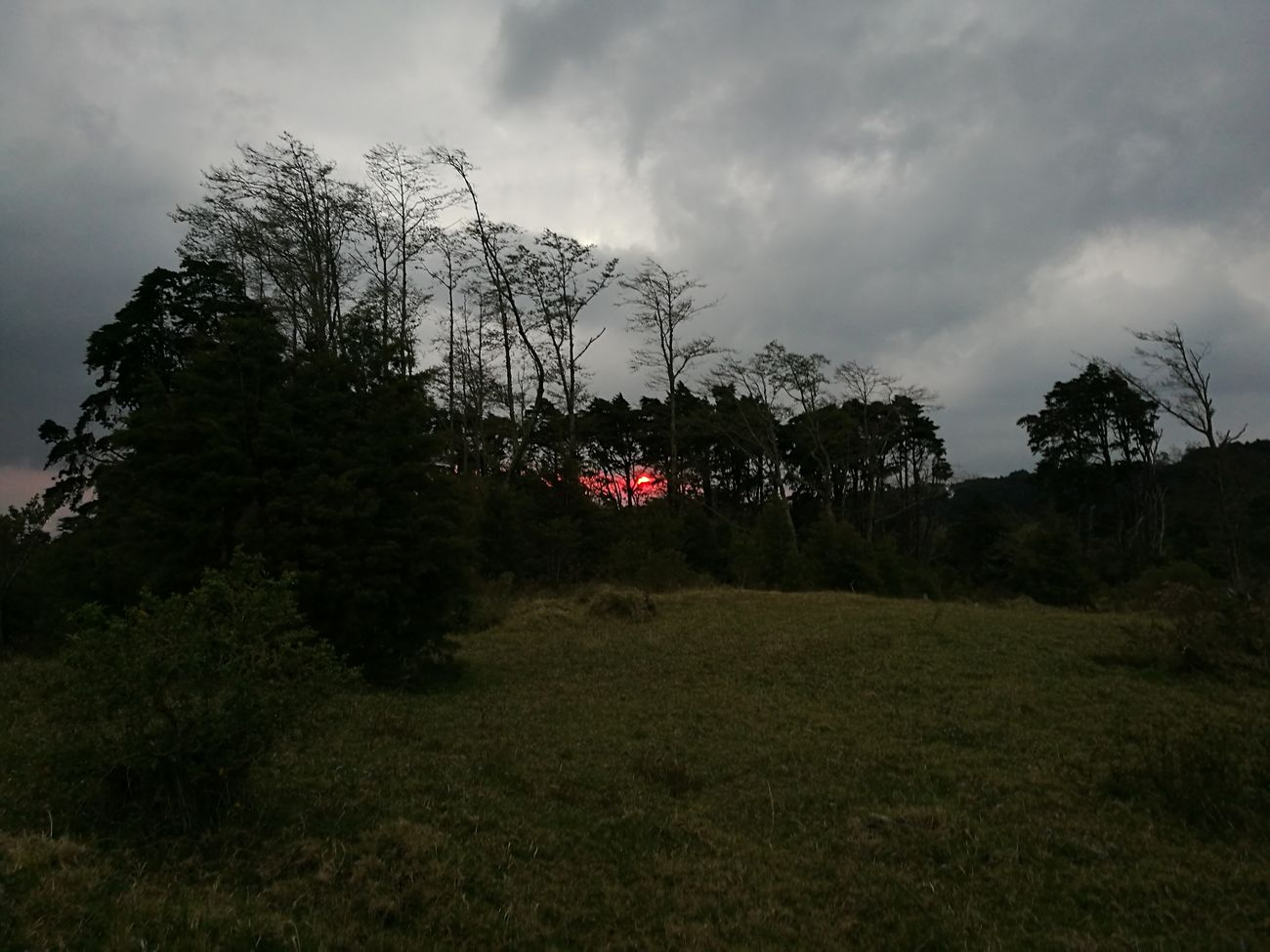 Red Sky At Sunset Tree Nature Outdoors Nature_perfection Costa Rica Love My Country No Edit/no Filter