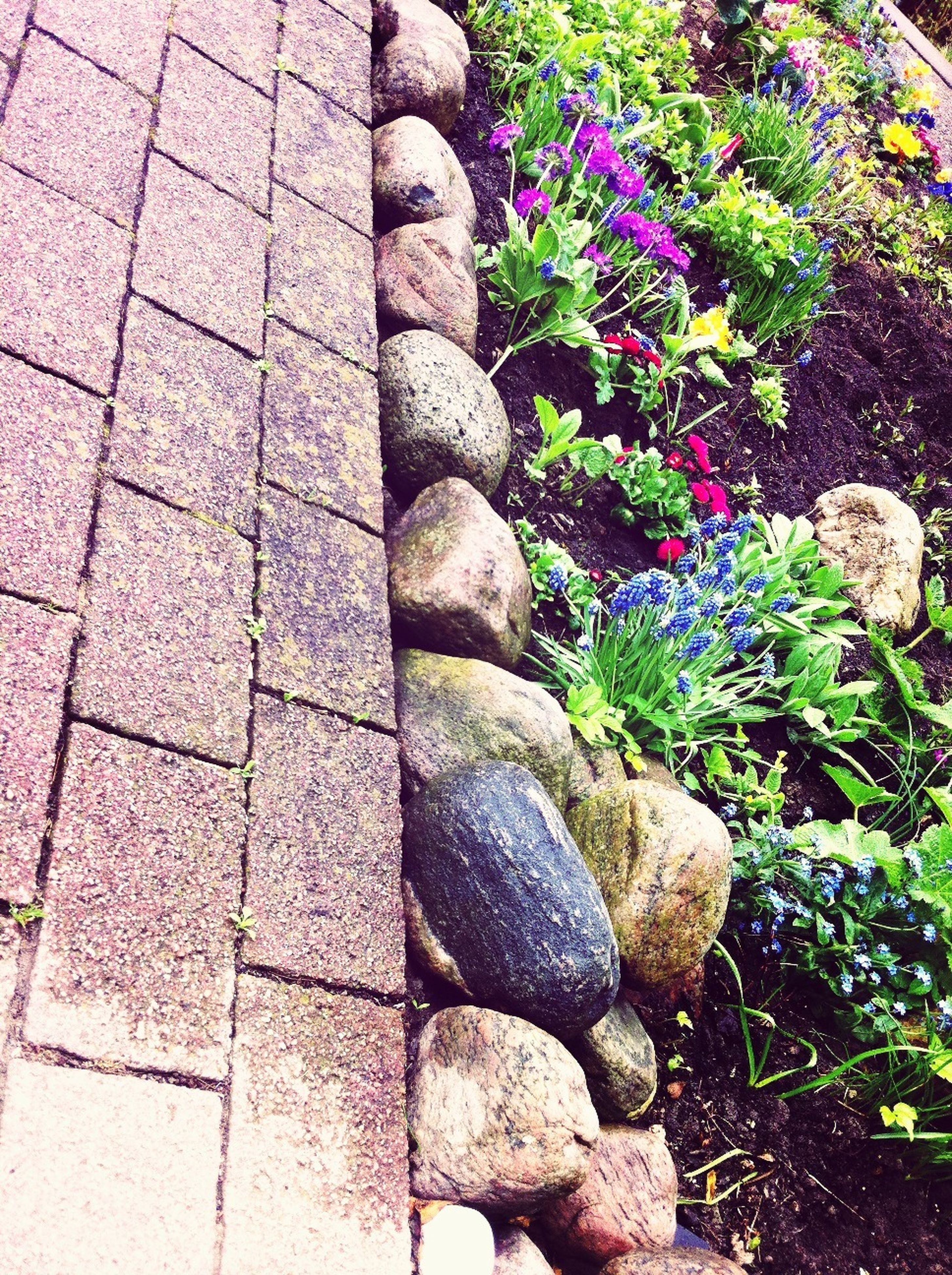 stone - object, plant, growth, stone, rock - object, nature, day, abundance, outdoors, high angle view, flower, no people, stone material, beauty in nature, stone wall, stack, pebble, large group of objects, textured, green color