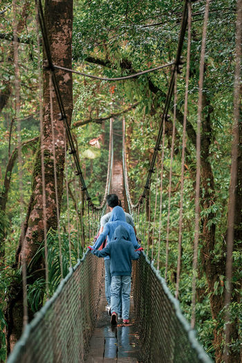 Puentes colgantes en heliconias de bijagua alajuela Costa Rica Adventure Bijagua Bridge - Man Made Structure Day Footbridge Forest Nature Outdoors Puente Colgante Tree Walking