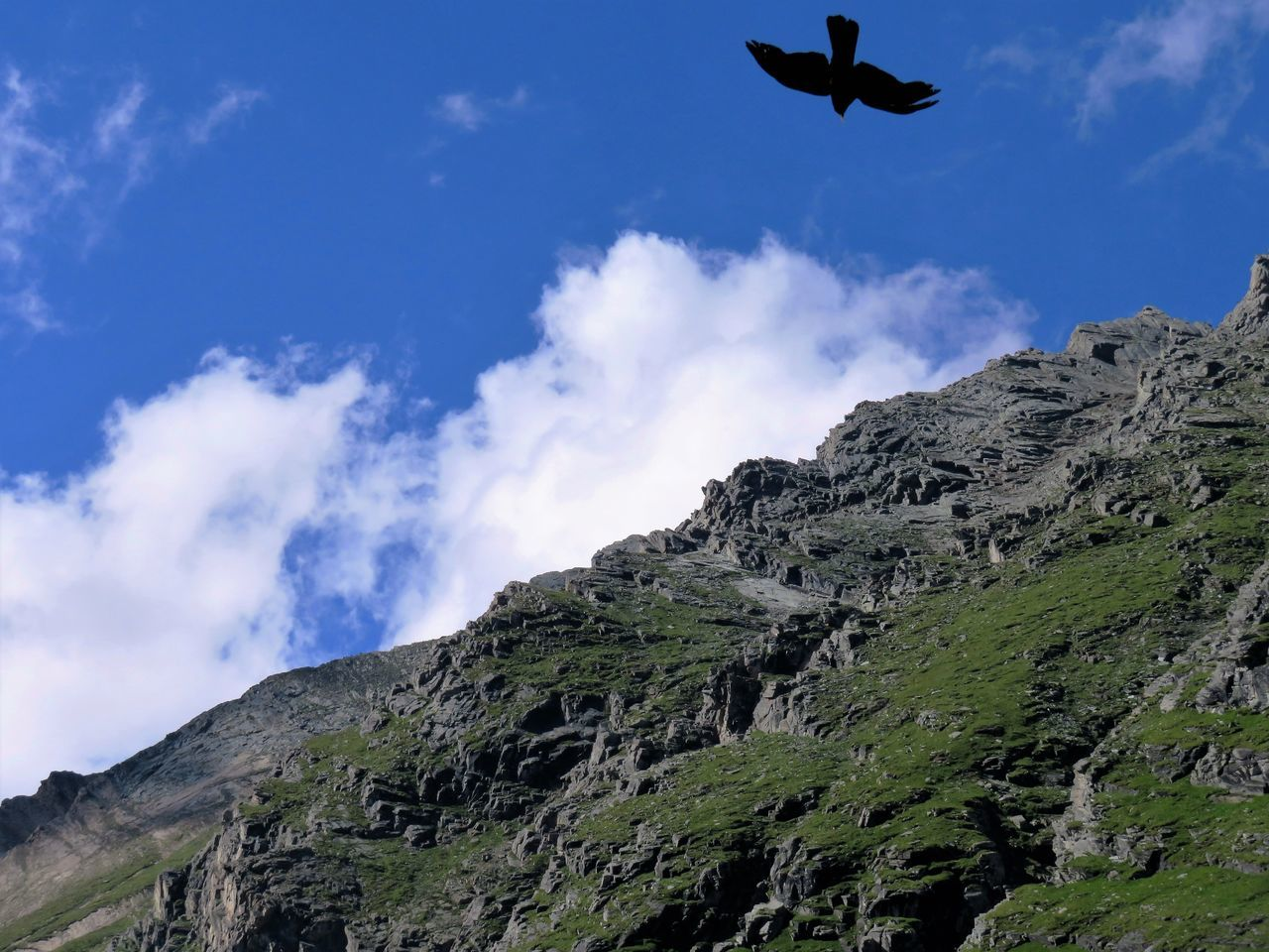 Alpine Chough Alps Austria Beauty In Nature Bird Chough Climbing Cloudy Flying Hill Idyllic Landscape Mountain Mountain Range Natural Park Nature Non-urban Scene Outdoors Pathway Protected Area Remote Scenics Tranquility Traveling Trip Photo