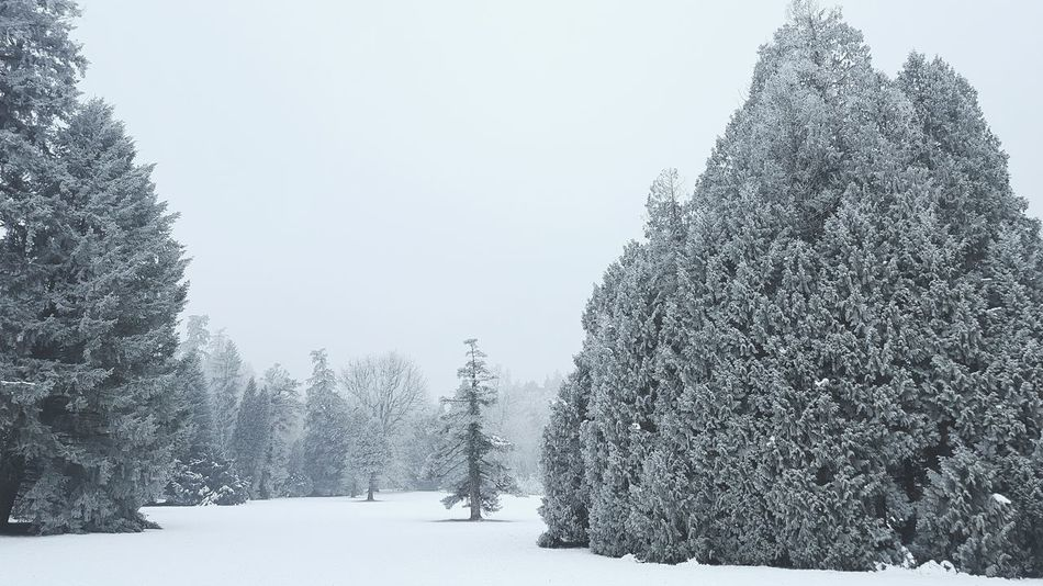 Snow Tree Nature Winter Cold Temperature No People Outdoors Snowing Sky Day First Eyeem Photo