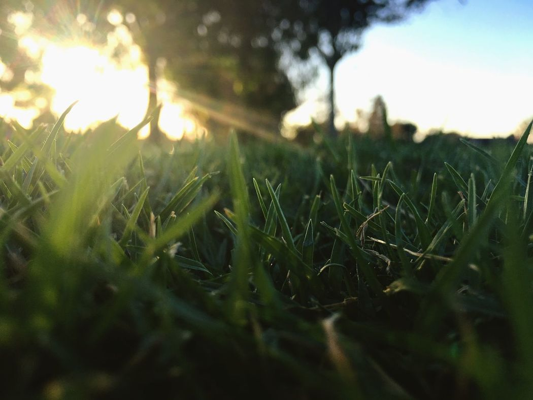 Grass Growth Green Color Blade Of Grass Greenery Outside Photography Field Close-up Plant Nature Sky God'screation Clear Sky
