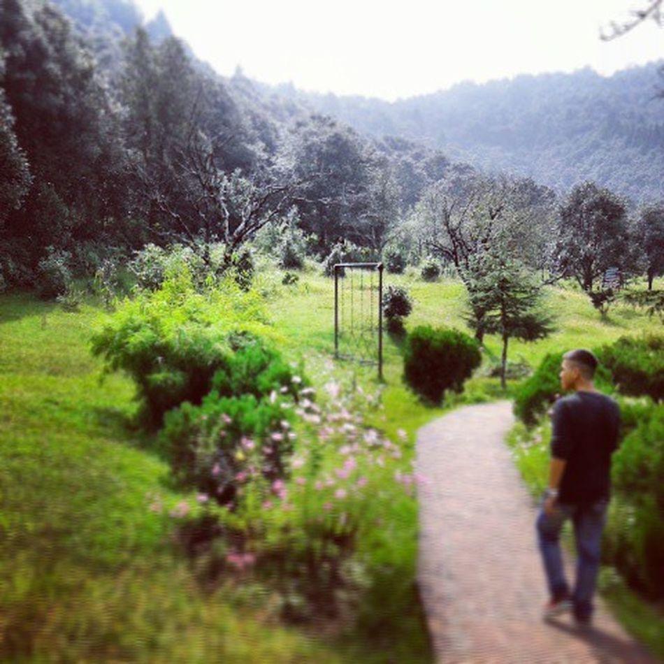 Wild Wilderness Intothewild Woods Jungle Alone Hills Alone Green Forest Roadlesstravelled Trekking TBT  TBT  Travel