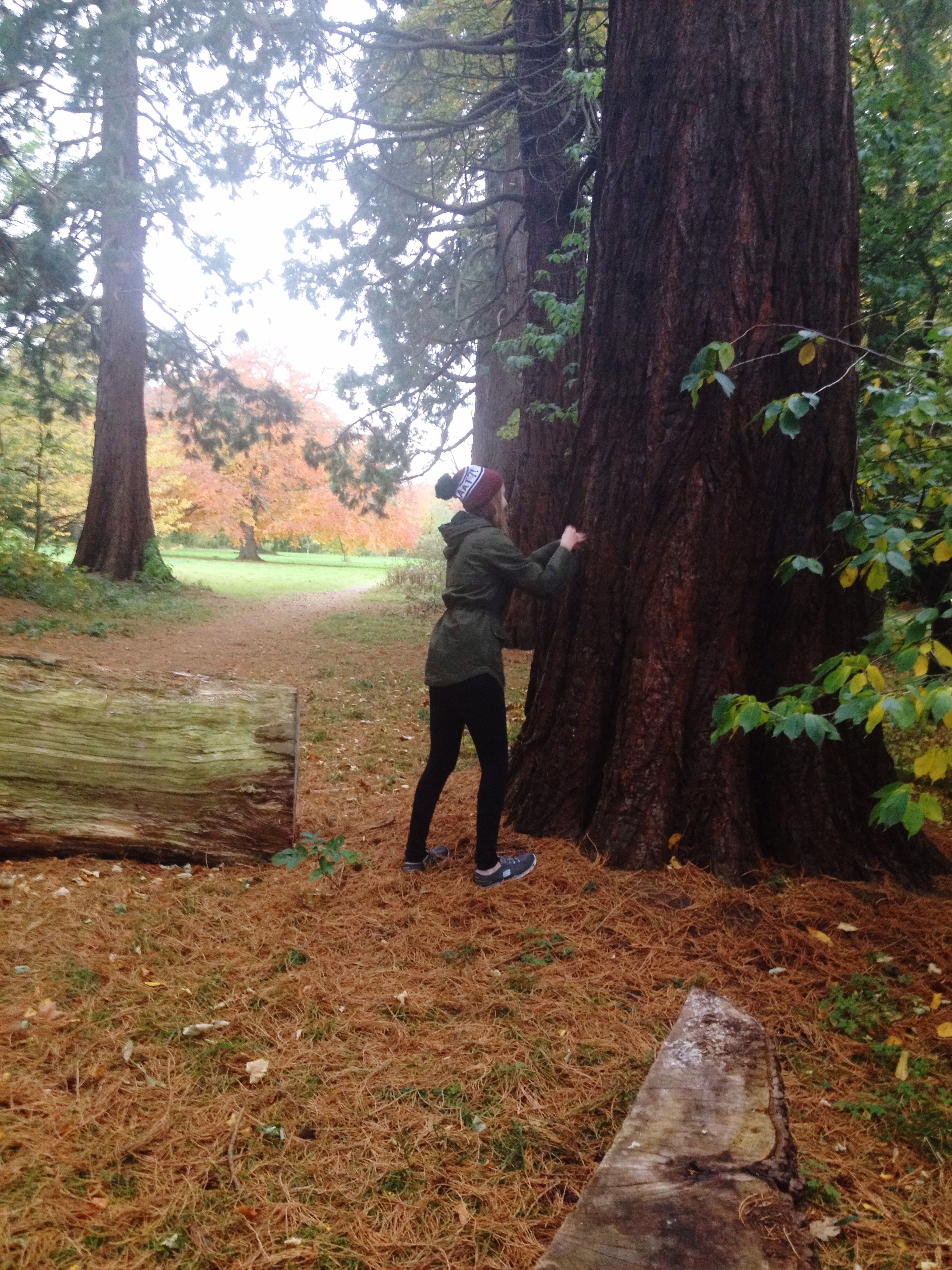 Me Punching a tree- redwood trees have soft spongy bark so when you punch it , it doesn't hurt Autumn Redwoods Scotland Walking Around Walk Nature ThatsMe Trees Colors