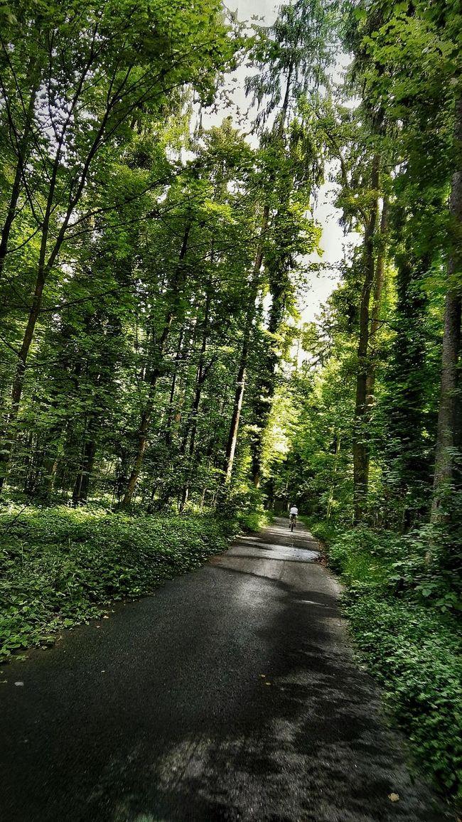 Biker On The Road im Waldweg, Grünes Leuchten Hohe Bäume Lichtdurchfluftet Straße Im Wald Street Photography Hidden Gems  Mehrerauer Wald Streetphotography