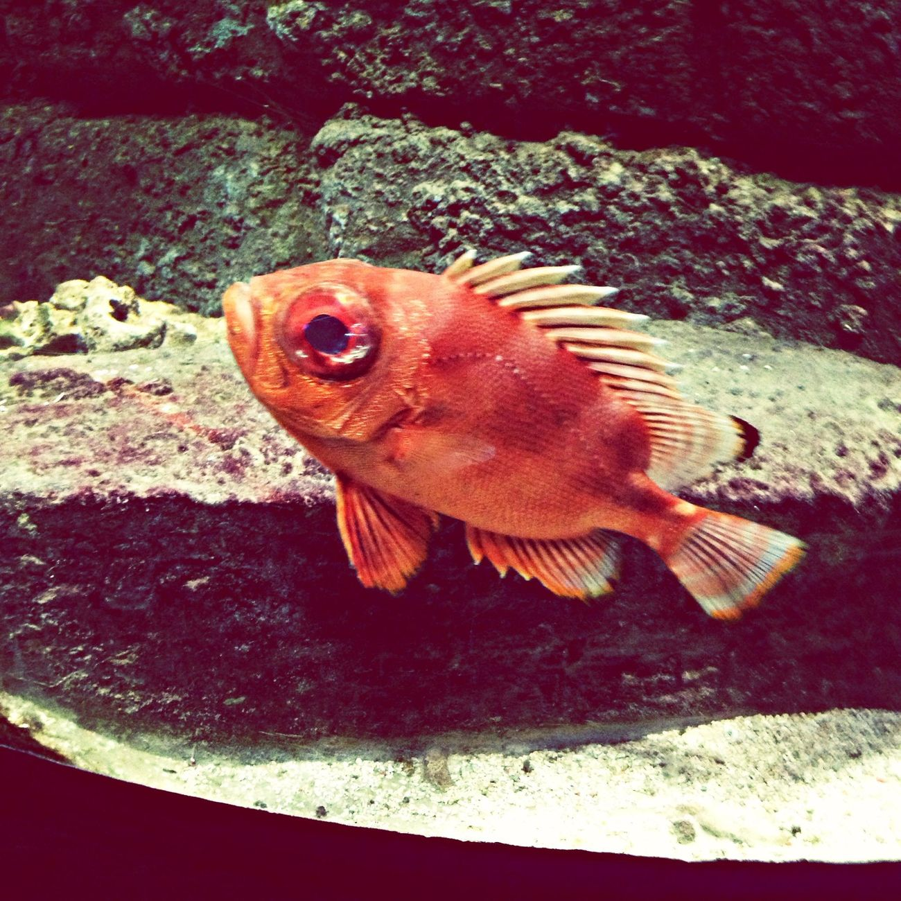 I took such a good photo of this fish, im so pleased :) its a awsome fishy