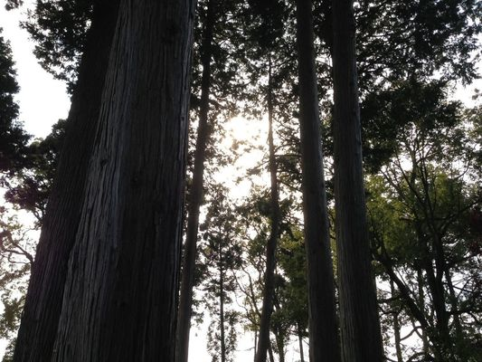 Trees by makiko_52