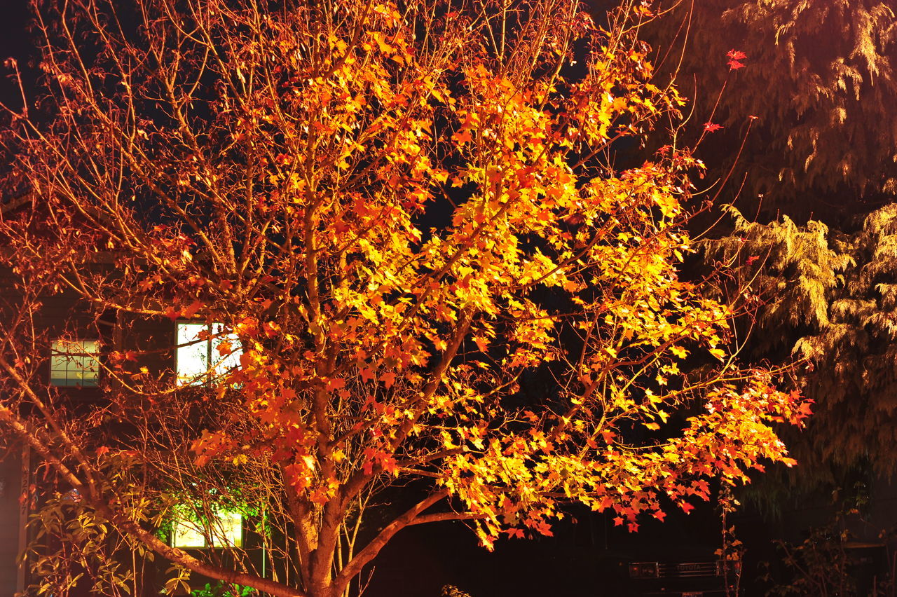 Beauty In Nature Branch Close-up Nature Night Night Photography No People Orange Color Outdoors Tree
