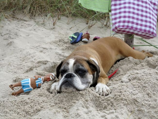 Arrrrg....to much dogs on the beach ;)... 25 Days Of Summer Enjoying Life Dogs SweetLe
