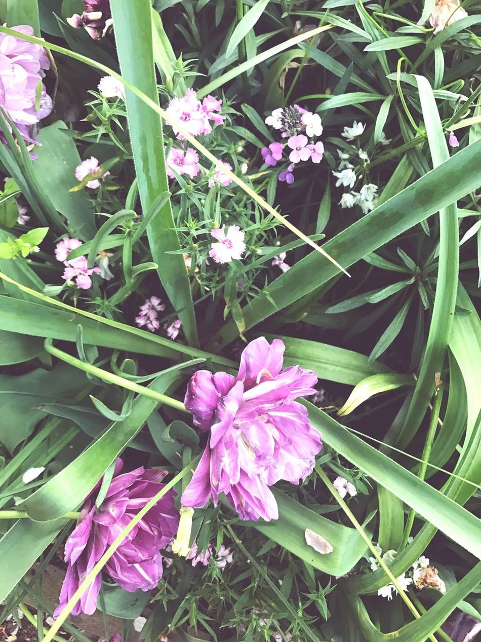 Spring to is the season. Flower Growth Nature Plant Freshness Fragility Beauty In Nature Blooming Petal Pink Color No People Outdoors Flower Head Day Spring Springtime Spring Flowers