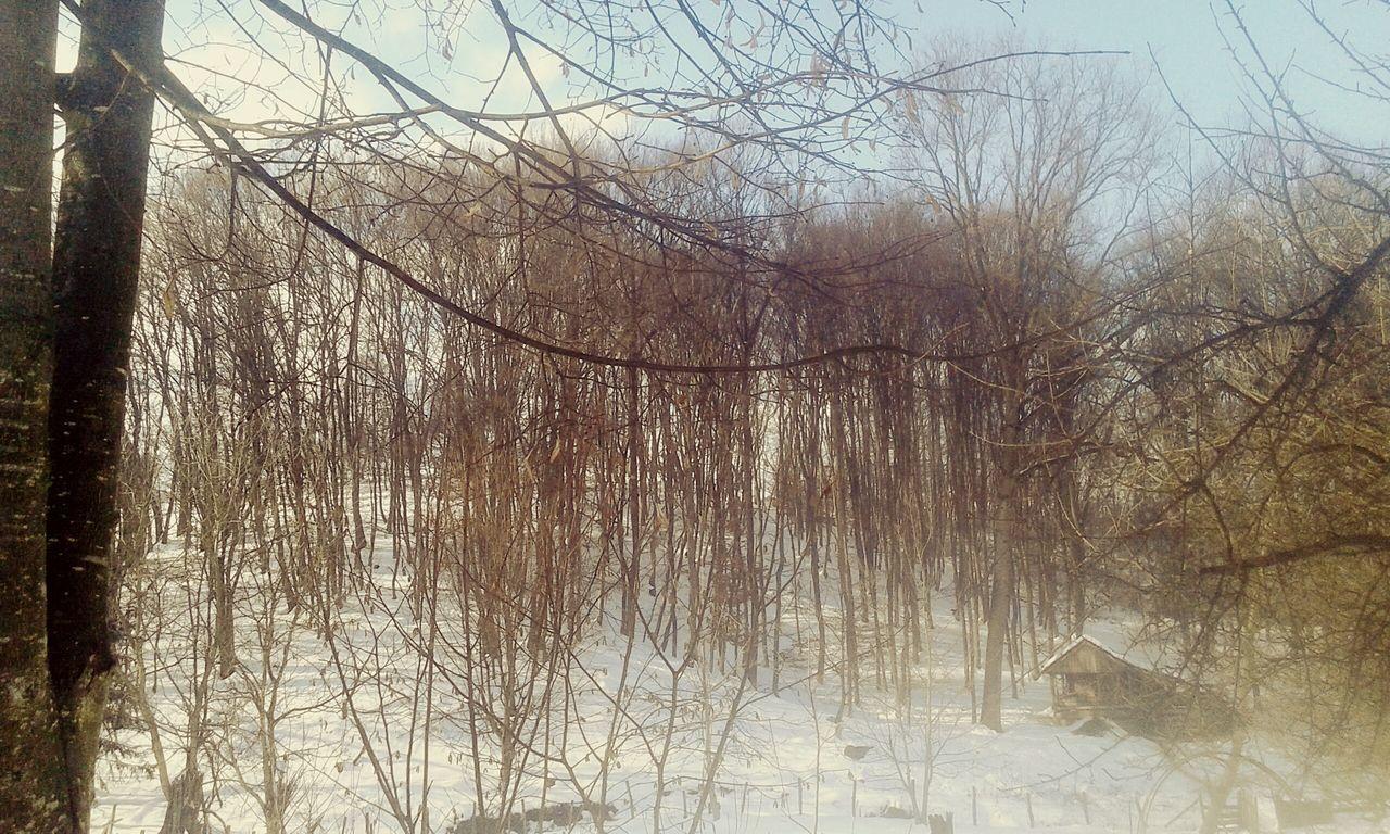 Snow ❄ Nature Enjoying Life Beautiful Nature