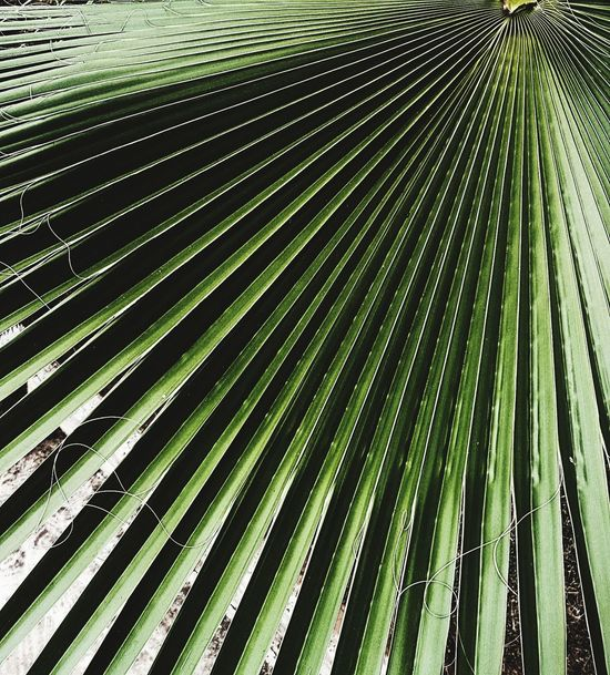 Nature Leaf Green Color Palm Tree Beauty In Nature