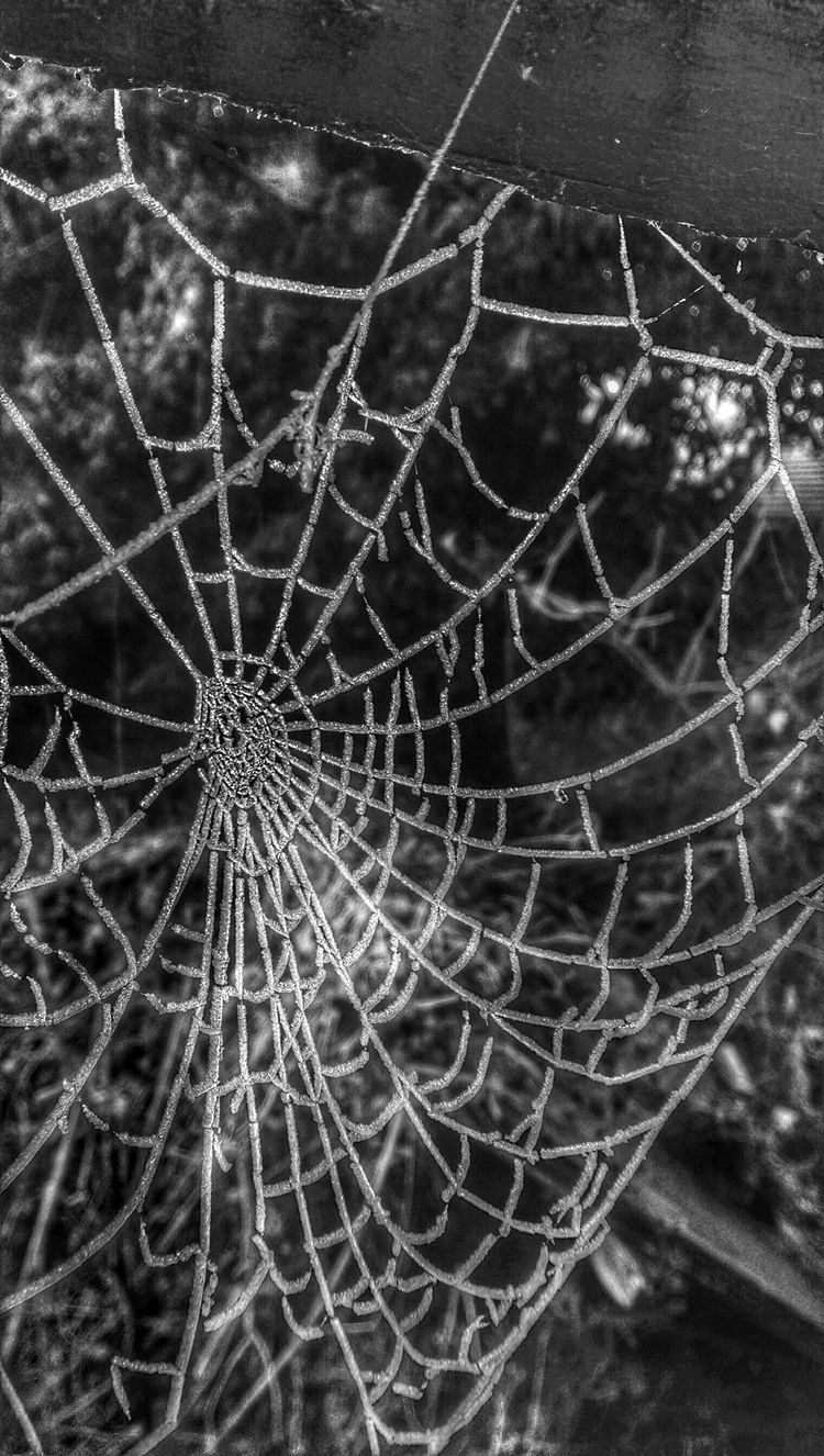 EE_Daily: Black And White Sunday Spiderwebs On Sunday Winter Spiderwebs Frozen Nature Taking Photos ❄ It's So Cold . Winter Wonderland