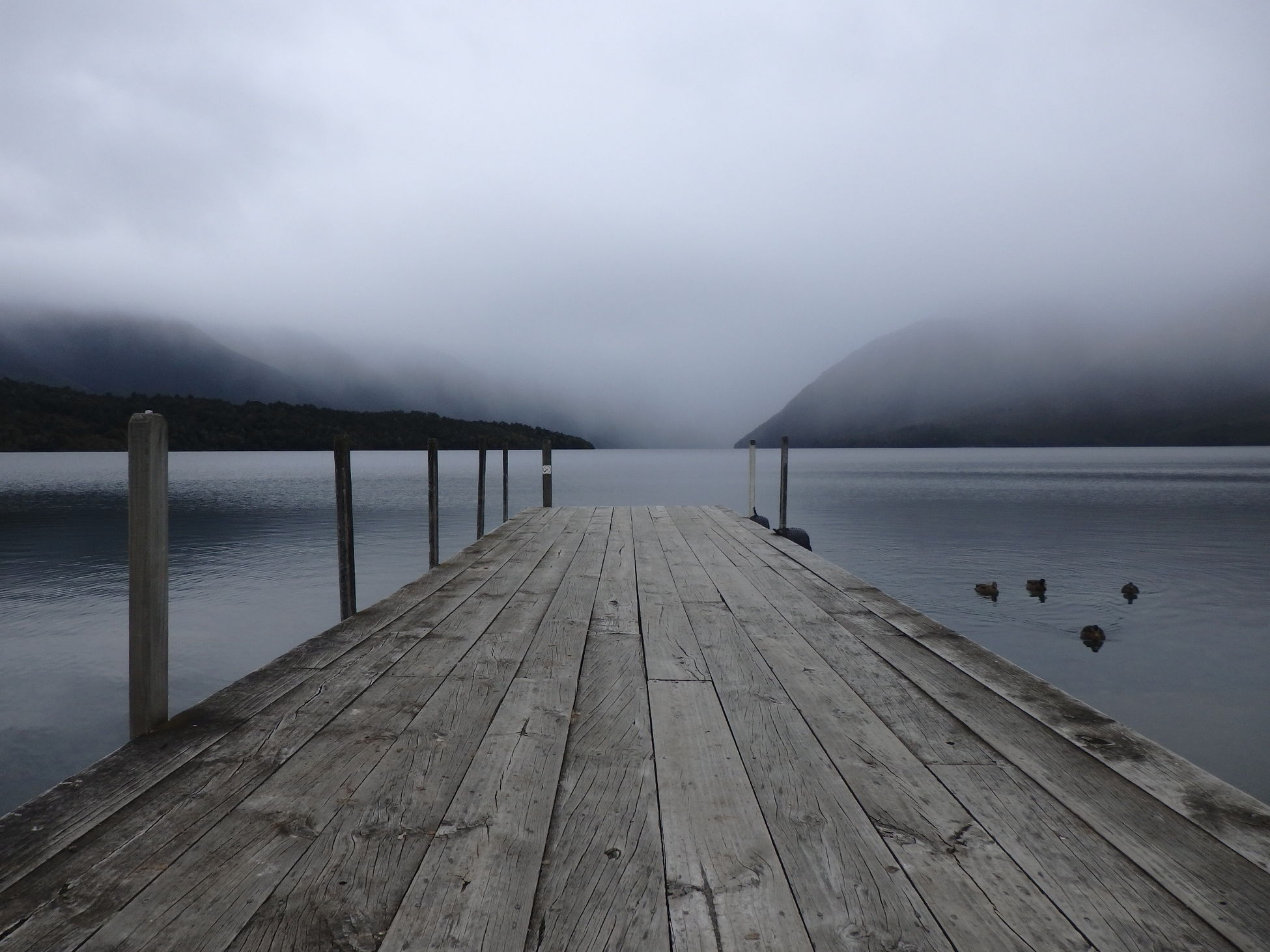 Jetty on a such mysterious lake ! Shades Of Grey. Lake Lake View Fog Foggy Weather No People Tranquility Rotoiti South Island South Island Trip New-Zealand