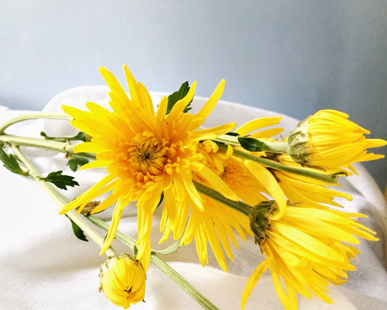 Flower Fragility Petal Freshness Yellow Flower Head Beauty In Nature No People Indoors  Flower Arrangement Gerbera Daisy Close-up EyeEm Best Shots The Week On EyeEem Eyeem Market VSCO Cam StillLifePhotography EyeEm Gallery Stillness