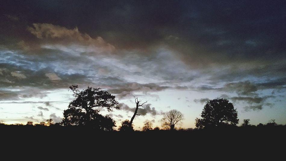 By Leesa Morris Sunset #sun #clouds #skylovers #sky #nature #beautifulinnature #naturalbeauty Photography Landscape [a:560743] Nature On Your Doorstep Belhus South Ockendon