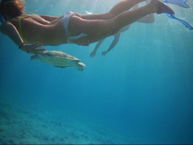 Mare ❤ Snorkeling Tartaruga Me Nuotare Life Is A Beach Portrait Of A Friend