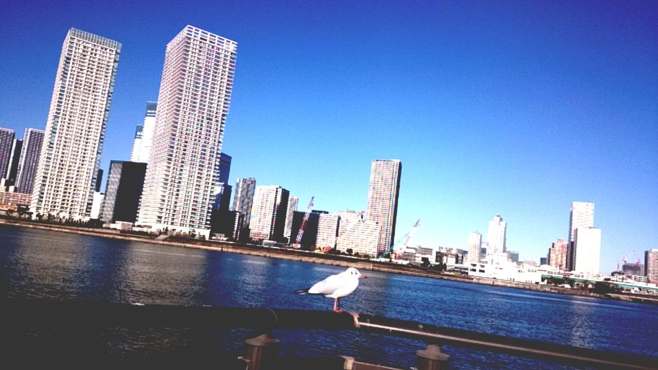 City Skyscraper Architecture Building Exterior Urban Skyline Built Structure Modern Clear Sky Cityscape Nautical Vessel Development No People Day Outdoors Sky Birds🐦⛅ Bird Tokyo,Japan Toyosu Sea Sea Side