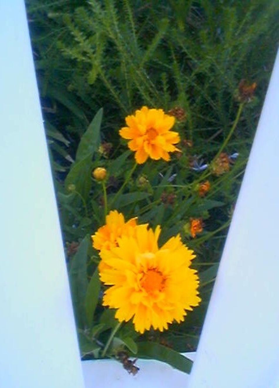 Beauty In Nature Close-up Flower Flower Head Flower Through Fence No People Orange Plant Yellow