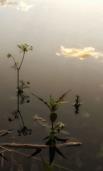 Like Painting On Water Blue Sky's And Clouds Reflections And Shadows Reflection_collection Reflection In The Water Silouette And Shadows Light And Shadow Art By Nature Relaxing Fotography Clouds On The Water Water Canvas Abstraction On Water Nature's Diversities