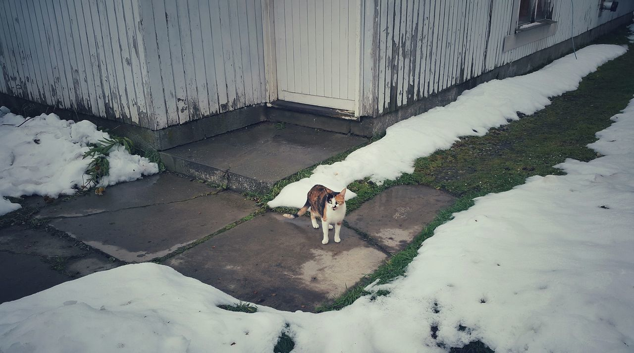 Cat Lovers Cats Of EyeEm Walking Around Taking Pictures Getty+EyeEm Collection In Ushuaia Eyemphotography Snow❄⛄ Cat Watching Eye4photography  First Eyeem Photo Cat♡ In The Hood Top Cat Pets Of Eyeem Street Photography Close Up Street Photography Showcase April Kid Eating Life Close Up Street Photography My Favorite Photo My Favourite Photo dueño de su casa