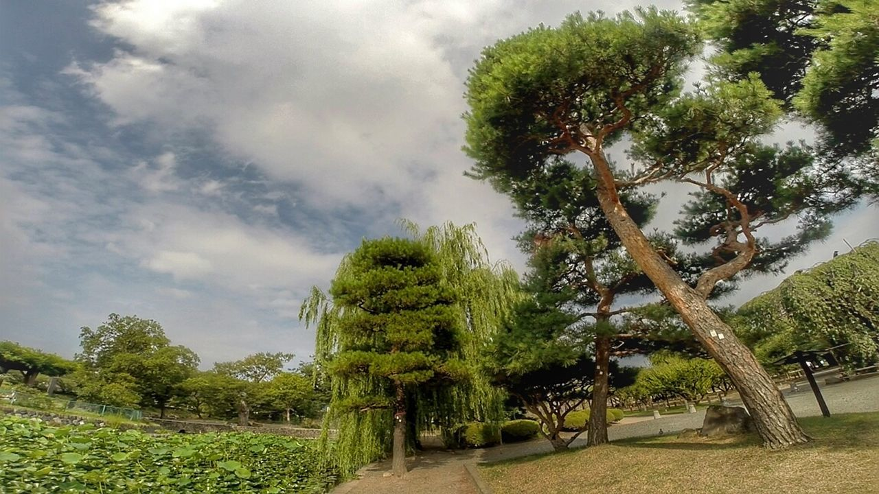 Nature Tree Outdoors Plant Sky Beauty In Nature Val  LG  G5se Lgg5se Japan Japanese Garden Japan Scenery