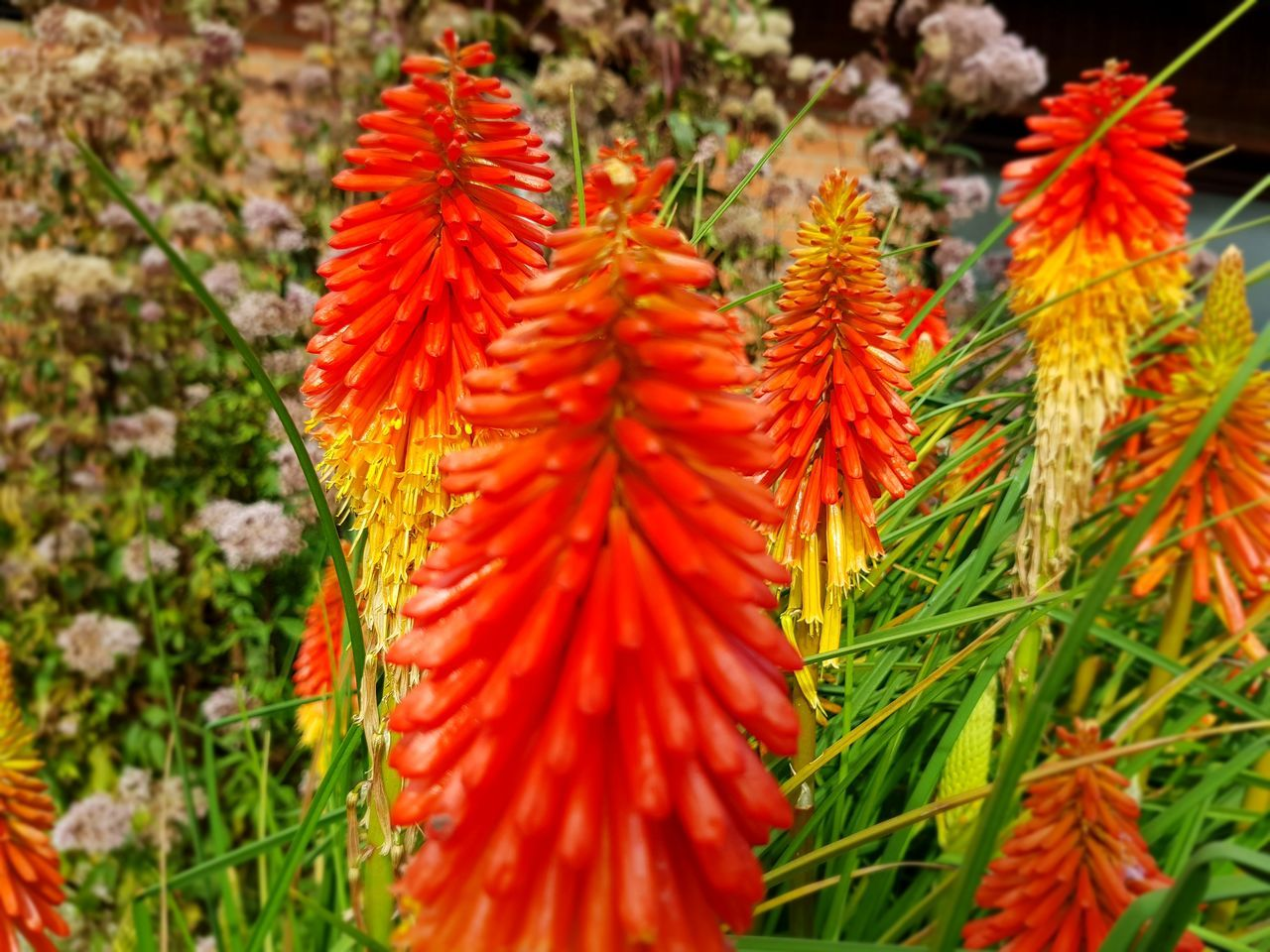 growth, orange color, nature, beauty in nature, red, fragility, plant, day, freshness, flower, no people, outdoors, close-up, leaf, flower head