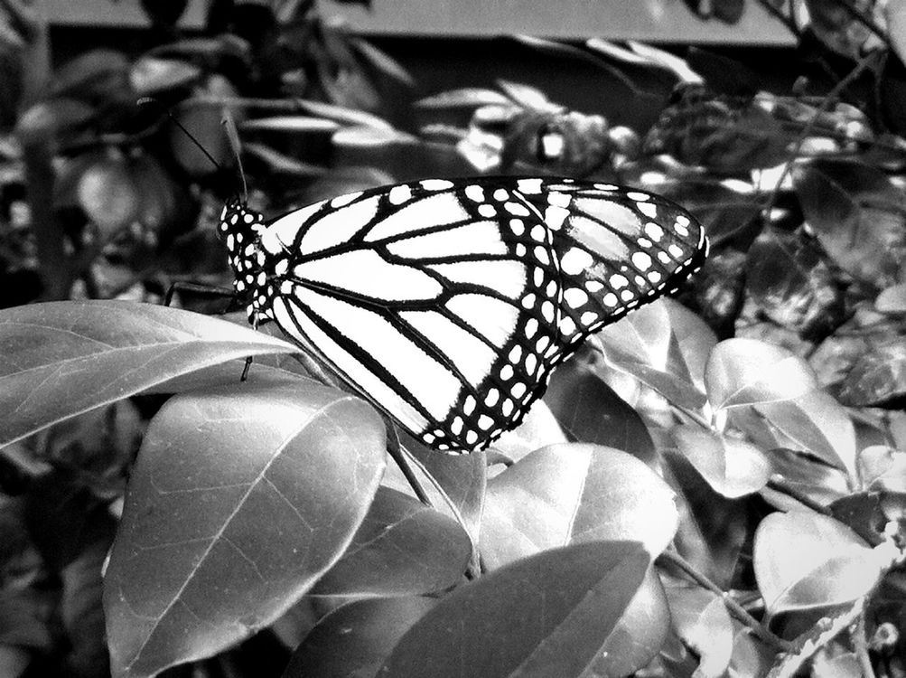 at Bronx Zoo at Butterfly Garden by Willie