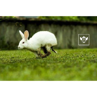 This rabbit really made my day ? Animal Love Jiniuskonxeptsphotography Photography