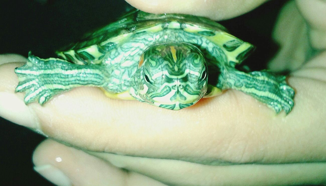 Myturtle Turtle Baby Turtle Cute Pet Animal Love