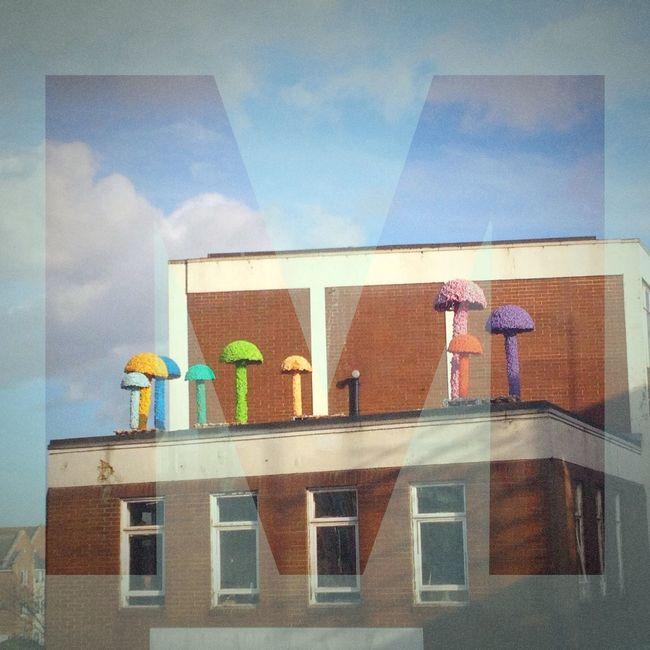 A-Z Of London Mushrooms on Mare Street