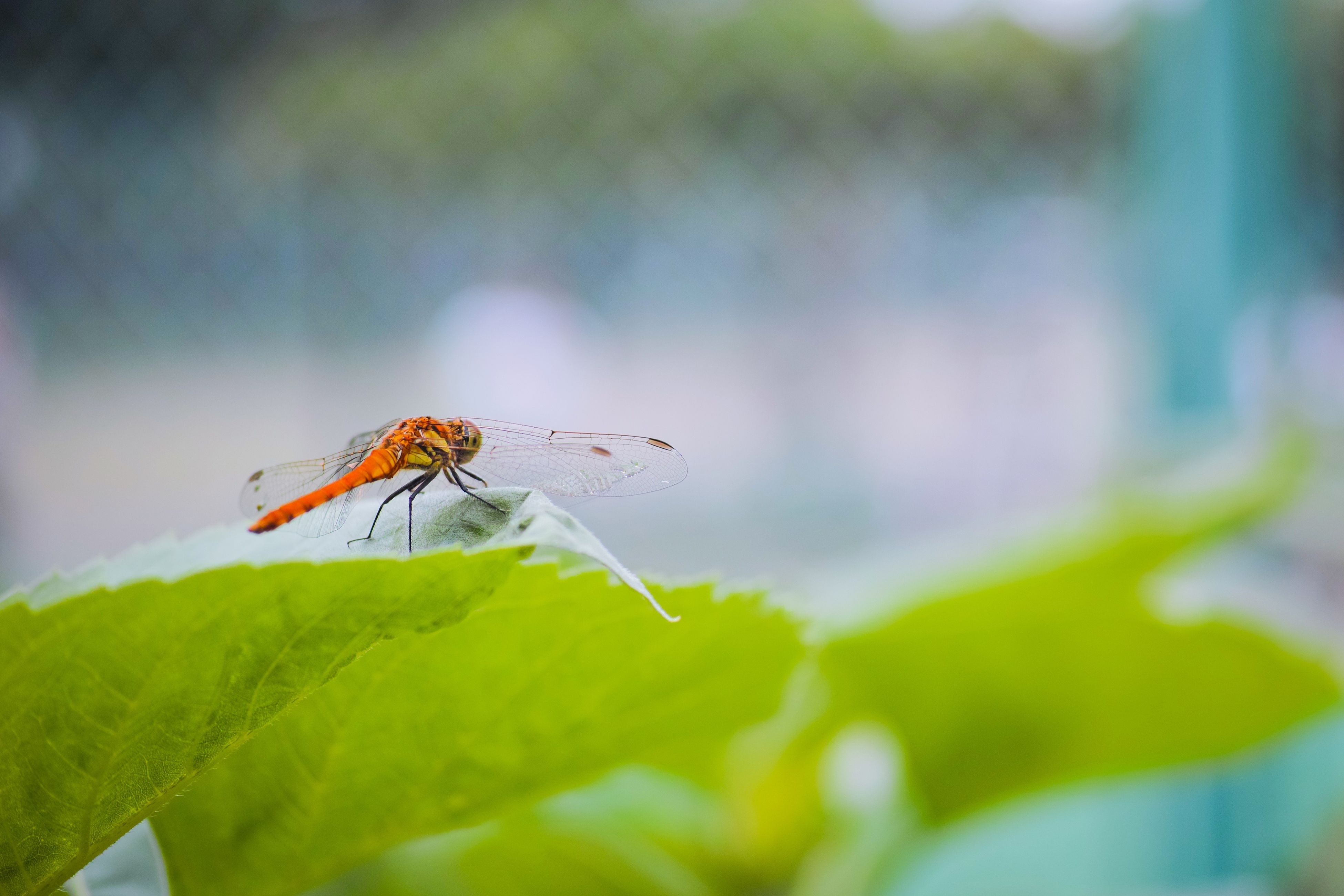 insect, animals in the wild, animal themes, one animal, wildlife, focus on foreground, flower, close-up, nature, plant, fragility, selective focus, animal wing, day, outdoors, beauty in nature, spider, growth, dragonfly, no people