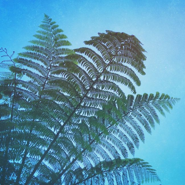 Fern GLHHZAW. IPhoneography Iphoneonly Fern Leaf Leaves Plants Trees Tree Green Sky Textured  Patterns In Nature Mextures Nature EyeEm Nature Lover Nature_collection