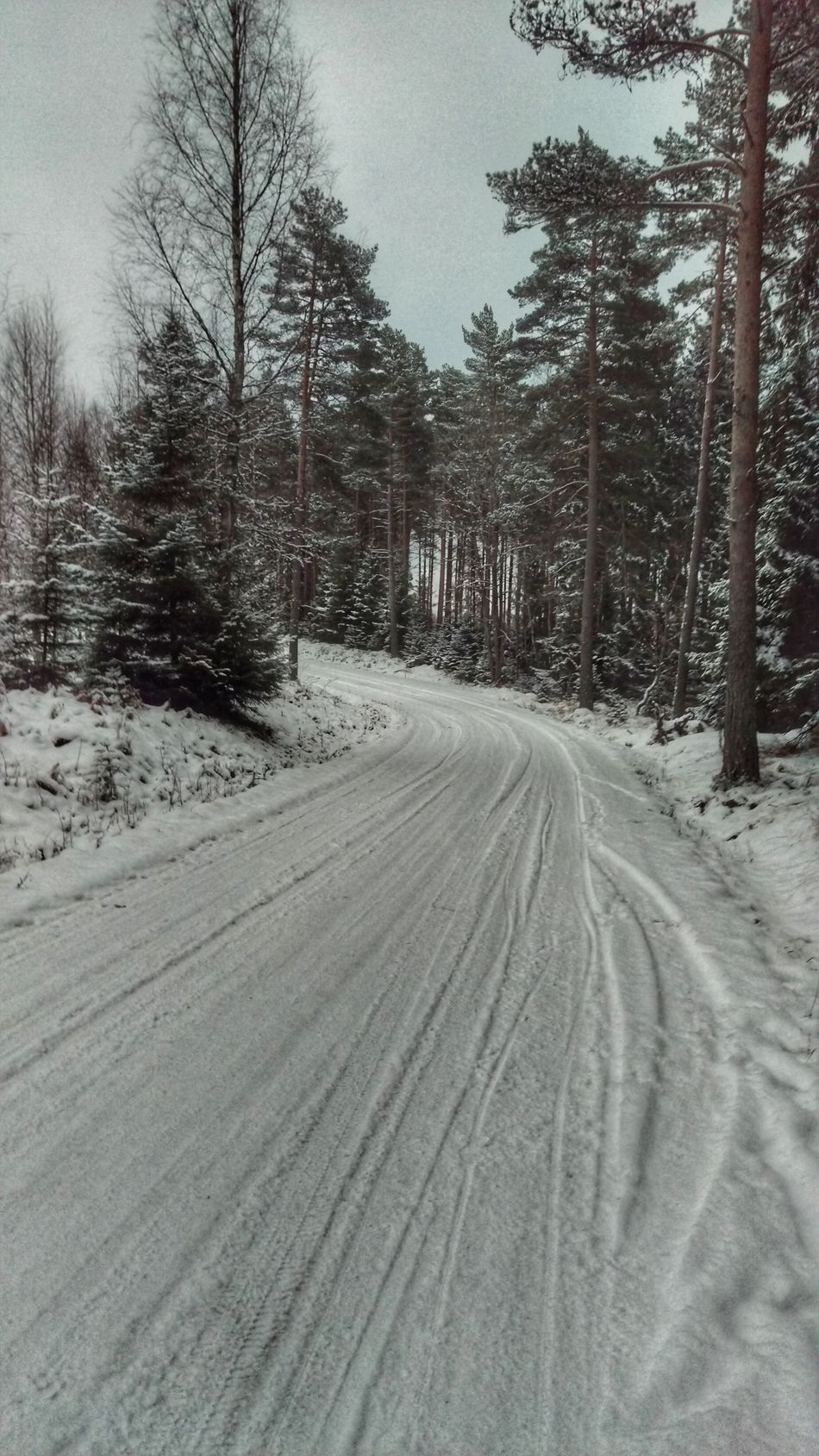 It's Cold Outside forest Forest Road Forest Road Kolmården Scandia Sweden Northern Europe Snow ❄ Snow Scandinavia EyeEm Gallery Winter January View Forest
